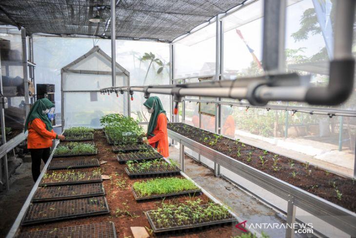 Inovasi perkebunan di perumahan