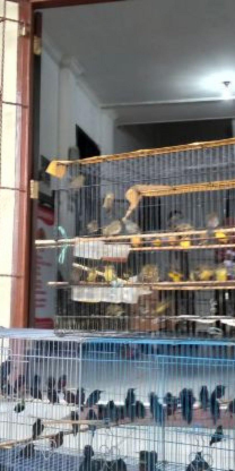 Bksda Jambi Selamatkan 340 Ekor Burung Kolibri Antara News Jambi