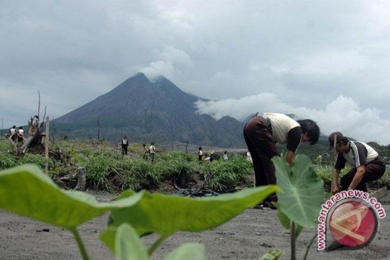 Taman Kehati Banteng lestarikan tumbuhan endemik Merapi