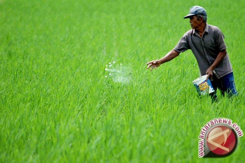 Bantul siapkan lahan pertanian berkelanjutan 13.000 hektare