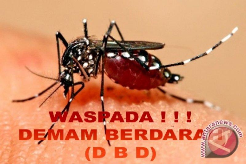 Awas! DBD Mulai Merebak di Tumbang Anjir Gumas