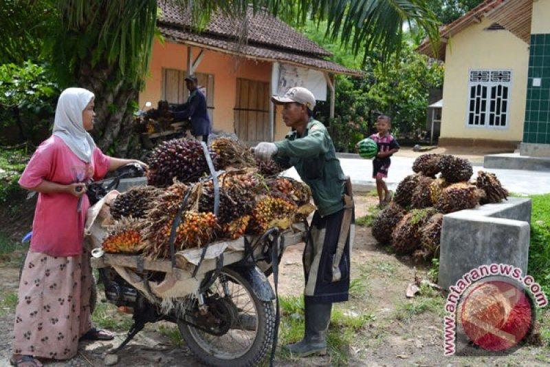 Sumbar mampu ekspor 22,8 ribu ton produk sawit ke China