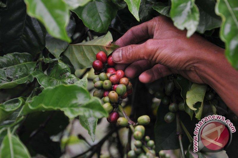 Dewan kopi Sumsel gandeng PT Pos kembangkan kopi daerah