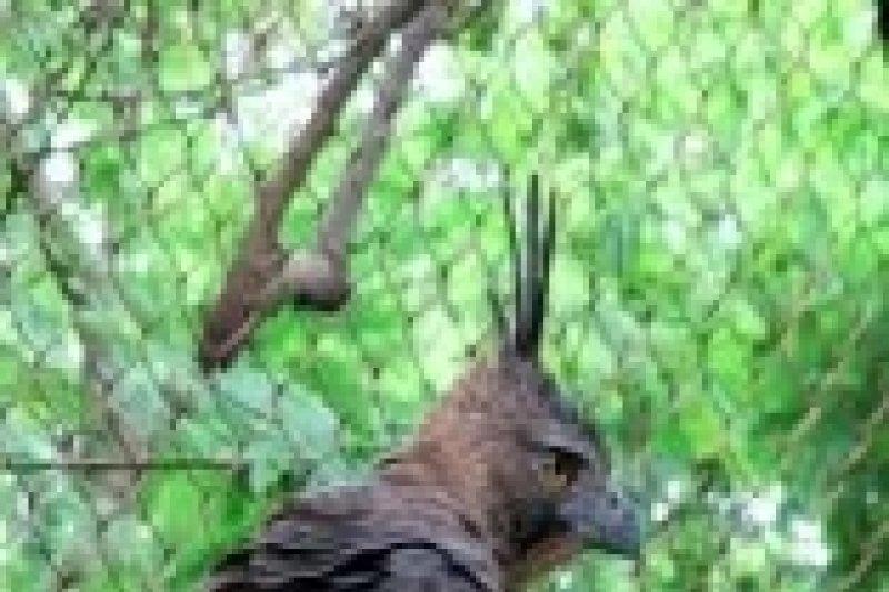 """Wrc Jogja pasang """"wing marker"""" Elang Brontok"""