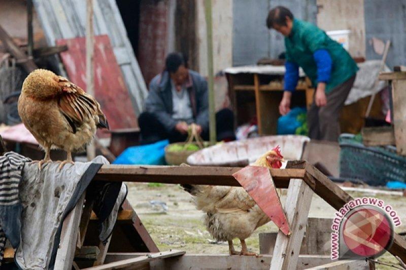 Warga China manusia pertama terinfeksi flu burung H10N3