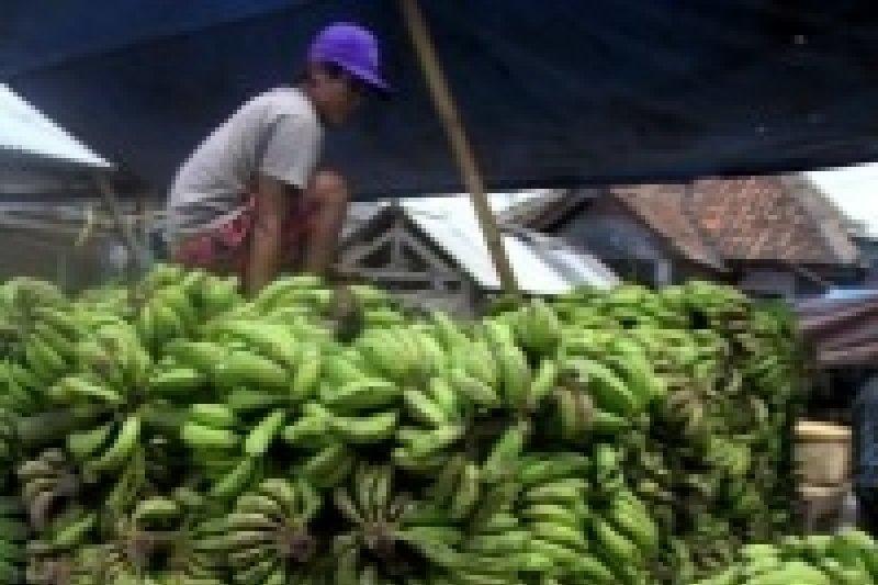 Bantul selenggarakan festival pisang