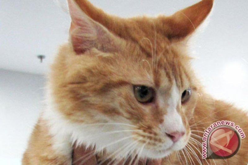 Huraira Menghajikan Orang Tua Berkat Kucing Antara News Sumatera Selatan
