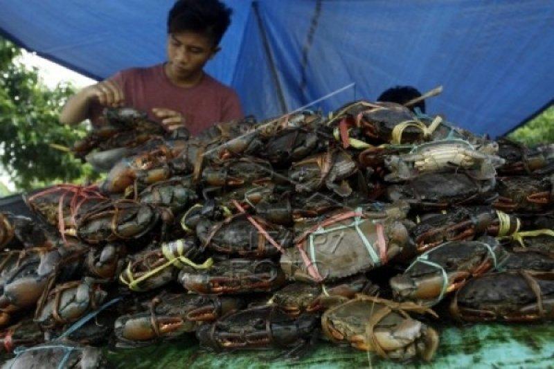 Kendari dorong nelayan kembangkan budidaya kepiting bakau