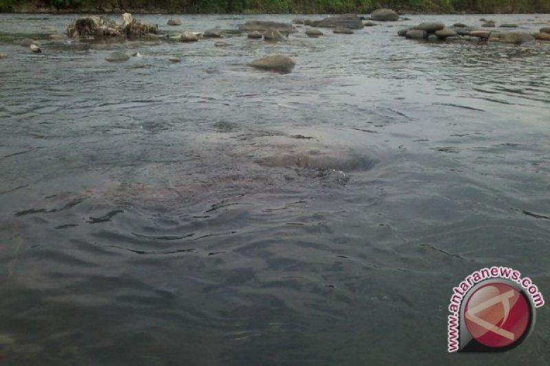 Menteri KLHK tangani serius pencemaran Sungai Cileungsi