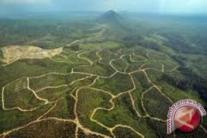 Industri sawit serap 2.400 orang pekerja Asli Papua