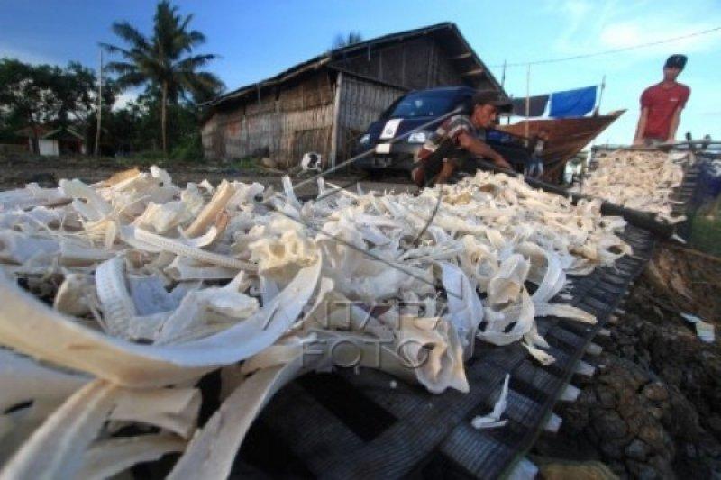 Inovasi gelatin ikan produksi IPB University solusi jaminan produk halal