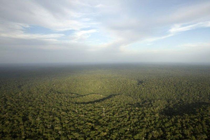 """Riset : Brazil """"pimpin dunia"""" tahun 2018 dalam penggundulan hutan"""