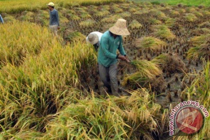 Minahasa Tenggara maksimalkan pengelolaan lumbung pangan kecamatan