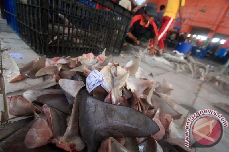 Konsumsi Sup Sirip Hiu di Cina Turun | Republika Online