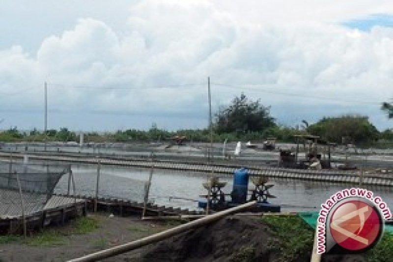 Pemkab: uap tambak udang tidak ganggu pertanian