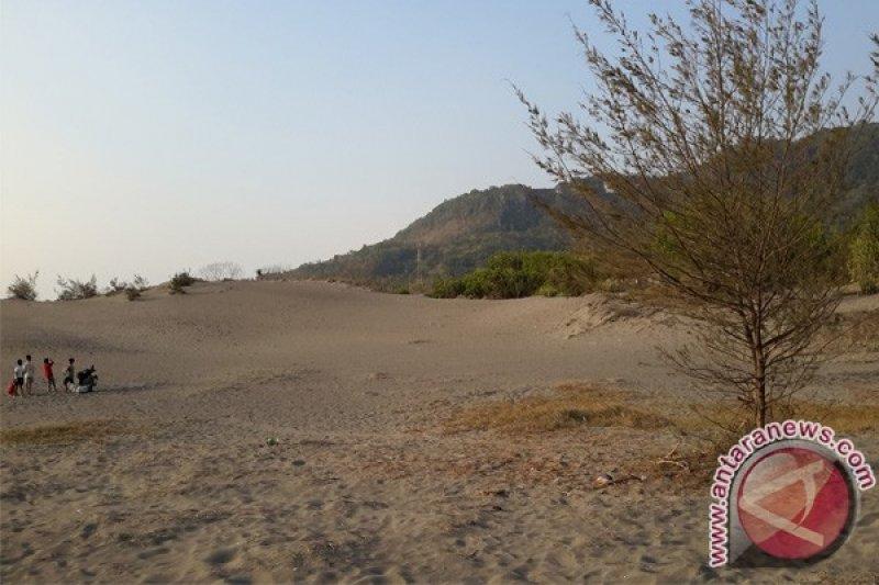 Bantul mulai mendata tumbuhan kawasan gumuk pasir