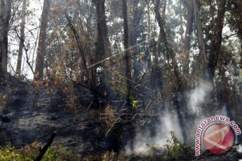 Pemadaman kebakaran hutan di Sigi libatkan TNI