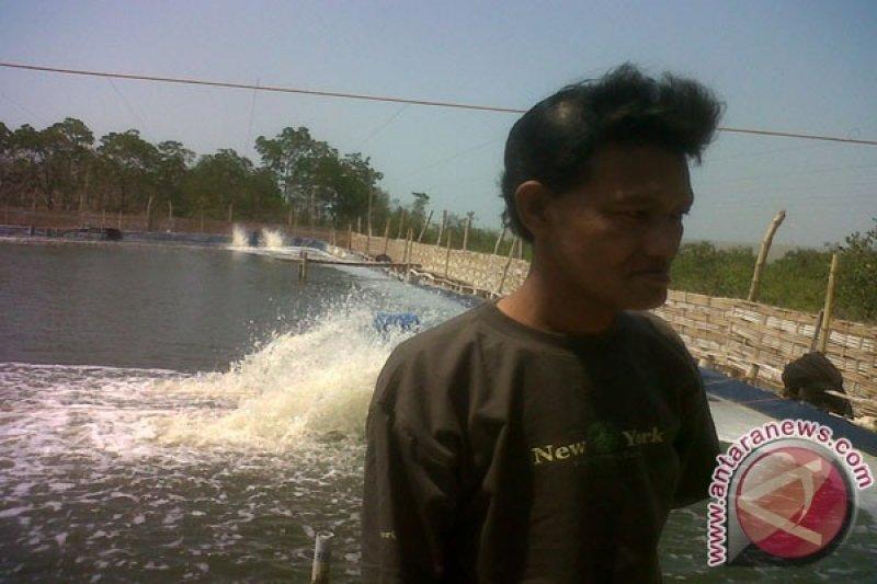 Petambak Lampung Timur beralih kembangkan udang vanamei