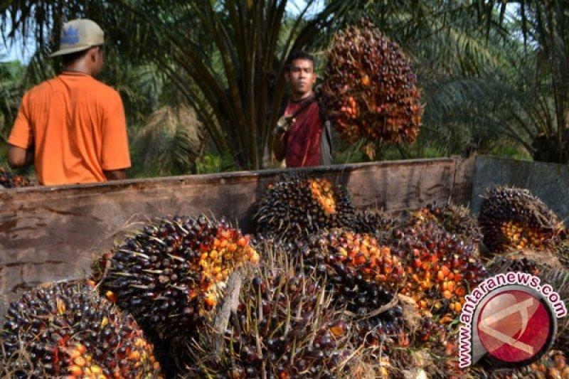 Ilmuwan: Sawit minyak goreng paling sehat