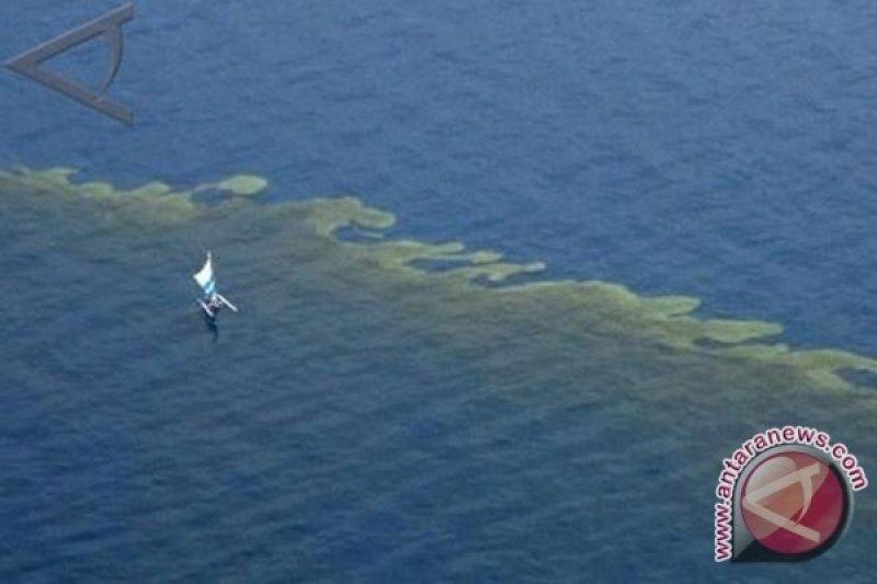 Warga Mauritius sumbangkan rambut untuk atasi pencemaran minyak di laut
