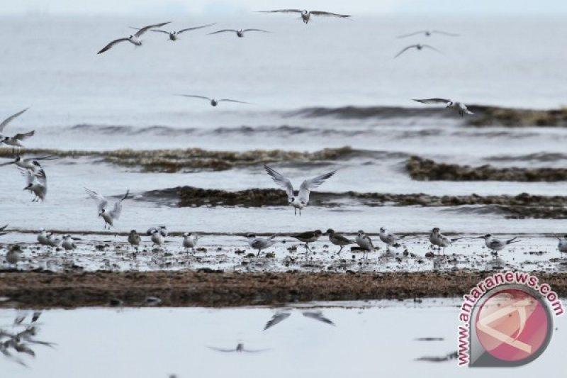 BKSDA DIY larang perburuan burung migrasi