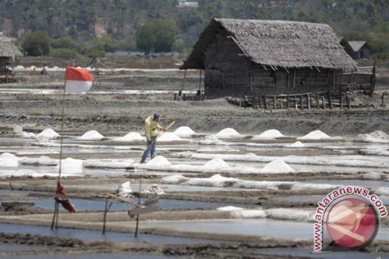 Pengembangan Garam Bipolo Capai 8.000 Hektare
