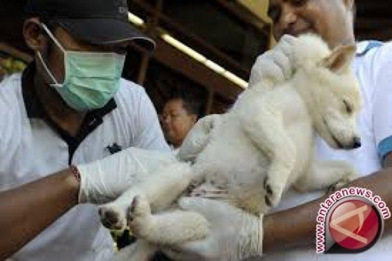 Agam Vaksin 3.074 Hewan Penyebar Rabies, Tapi Kasus Rabies Tetap Ditemukan