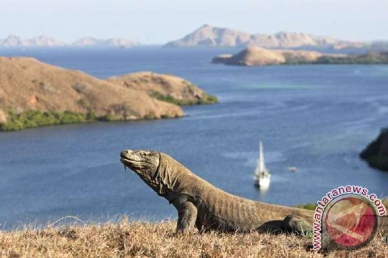 Management of Komodo National Park is central government`s authority