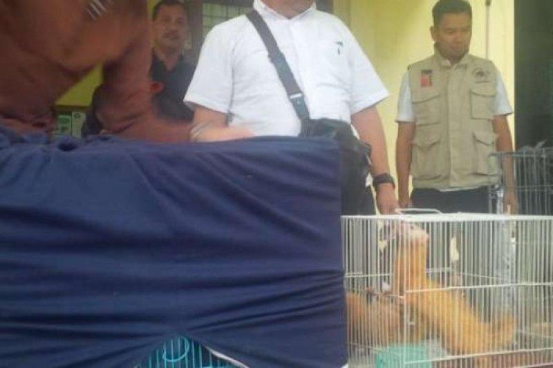 Macan, Lutung, dan Elang Disita BPPHKLHK dari Rumah di Pekanbaru