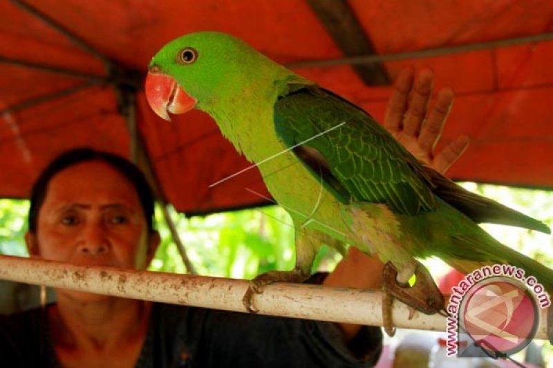 Penjual Burung Betet Antara News Makassar