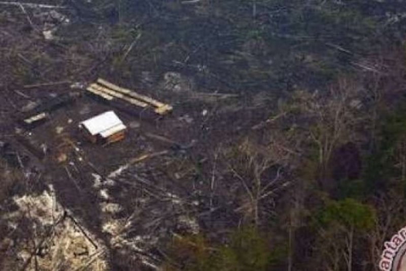 218 Hektare Perhutanan Sosial di Kuansing, LSM Lingkungan Diajak Mengelolanya