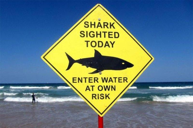 Peselancar Australia mrninggal diserang hiu