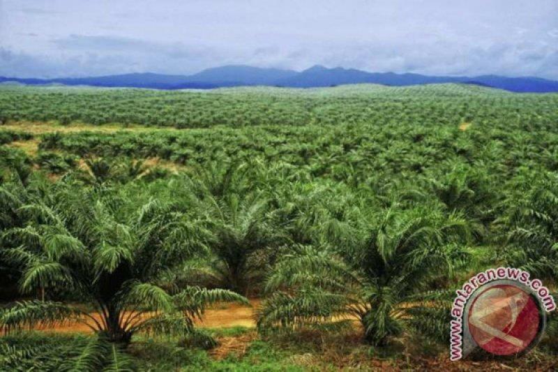 Mahasiswa Indonesia simulasikan karya tentang kelapa sawit di Swiss