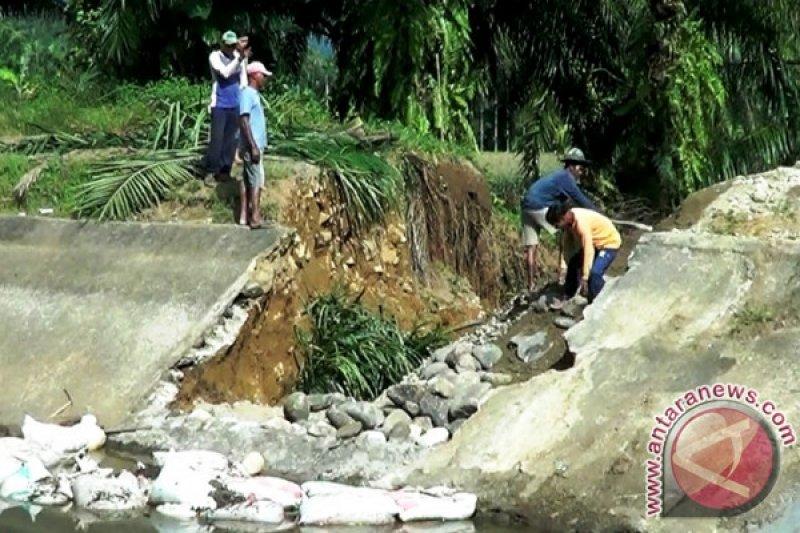 Irigasi Batang Tongar Jebol, 126 Hektare Sawah Rusak