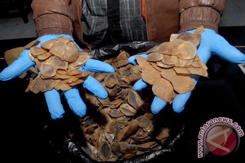 Penjual sisik tenggiling dan paruh rangkong ditangkap di Pasaman Sumbar
