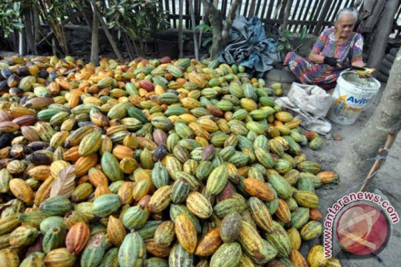 Parigi Moutong produksi kakao 69.704 ton
