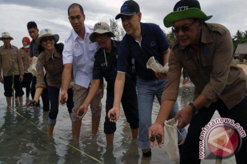 LIPI dan SMF Menebar Ribuan Teripang di Gili Matra