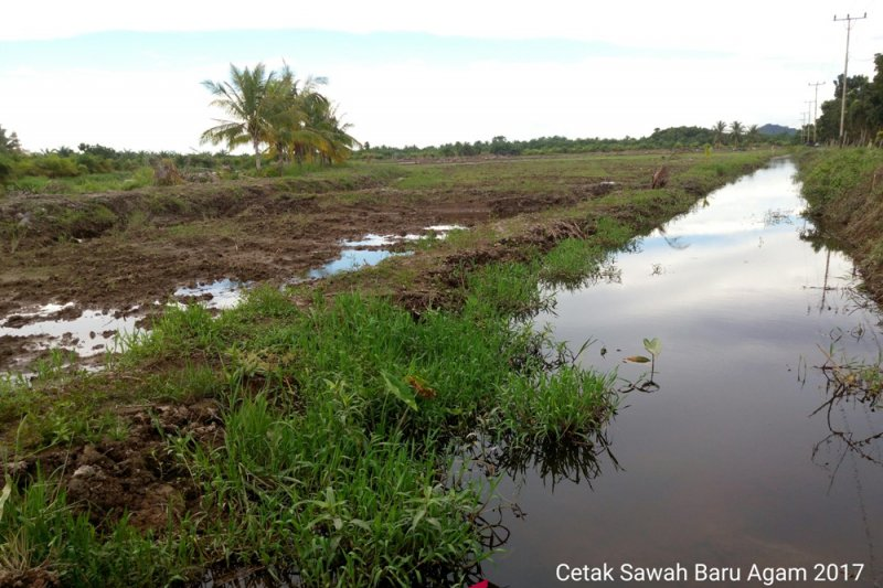 Legislator Kalteng sebut tujuh desa di Kotim usulkan cetak sawah baru