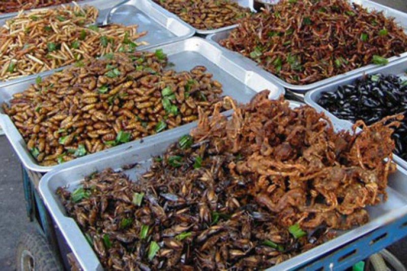 Seorang koki mengubah serangga menjadi santapan lezat