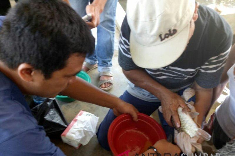 Four species of local rare  fish bred in Solok Selatan