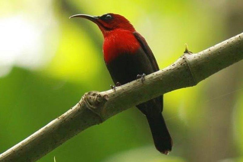 Bksda Amankan 340 Ekor Burung Kolibri Antara News Sumatera Selatan