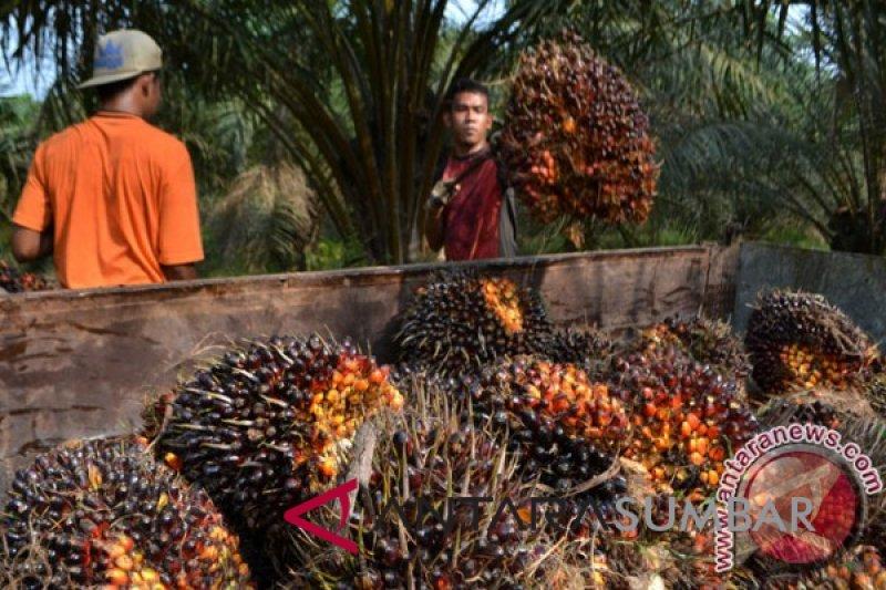 Membuka Indonesian Palm Oil Conference, Presiden minta produktivitas sawit ditingkatkan