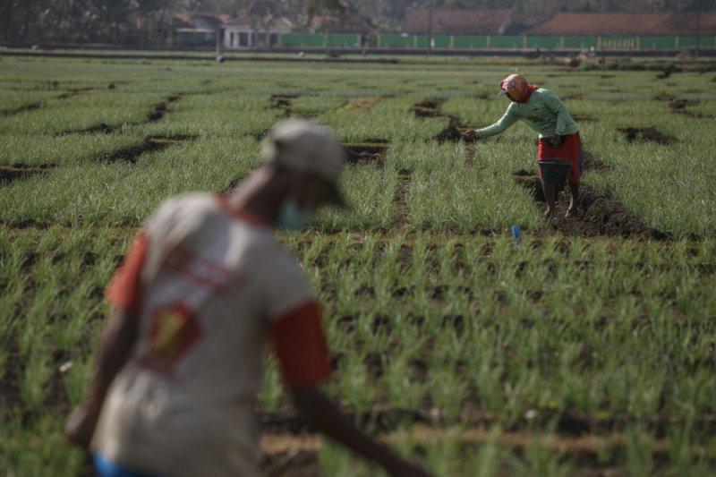 Dinas Pertanian Sleman mendorong petani kurangi pupuk kimia