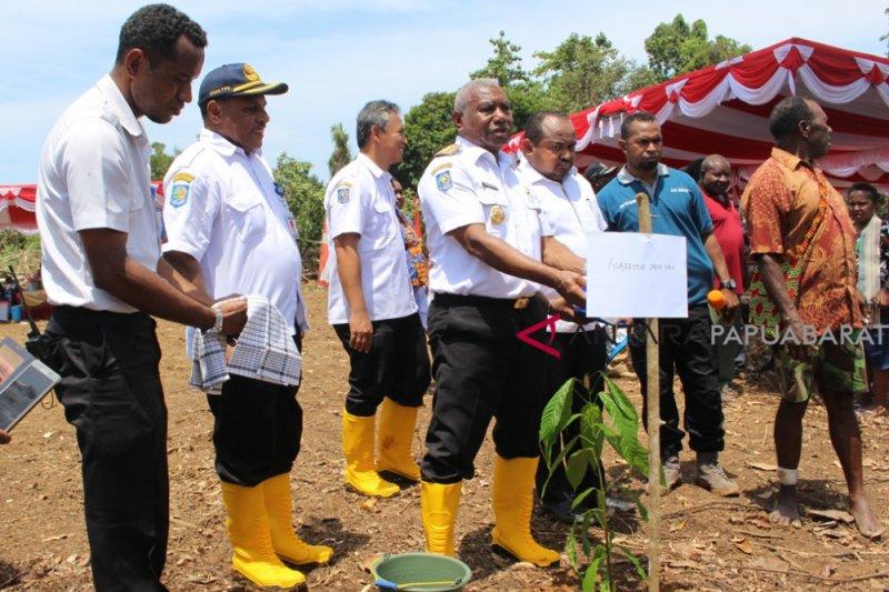 Investor asal Belgia lirik potensi kakao di Manokwari Selatan