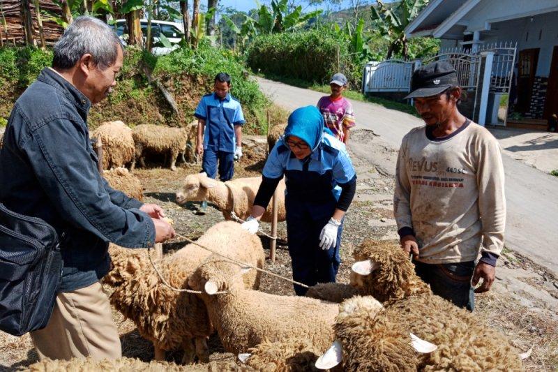 Pemkab Banjarnegara akan susun standarisasi bibit domba Batur