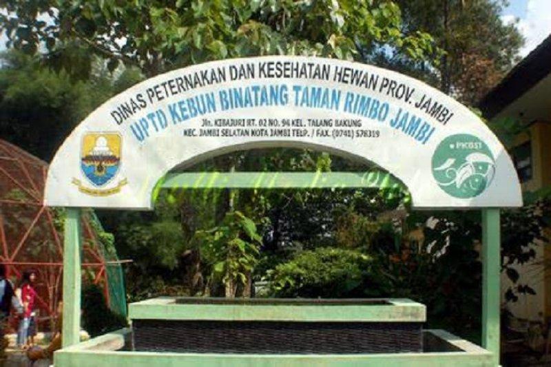 BKSDA Evaluasi KB Taman Rimba Pascakematian Harimau dan Singa