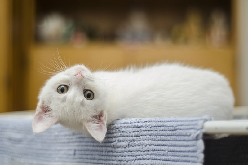 Bunuh kucing di mesin cuci, pria Malaysia dipenjara 34 bulan