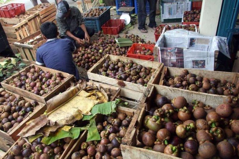 Buah Manggis Raya asal Bogor jadi komoditi ekspor