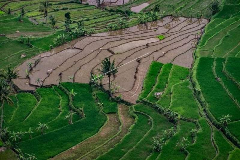 Setahun Jokowi-Ma'ruf, urgensi  membenahi data pangan Indonesia