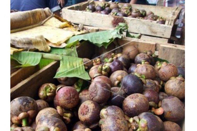 3.010 ton manggis Purwakarta diekspor ke China